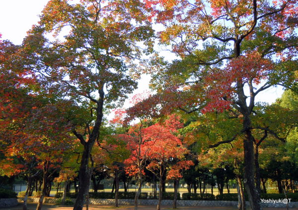 Suburban park in autumn colours, Kanagawa