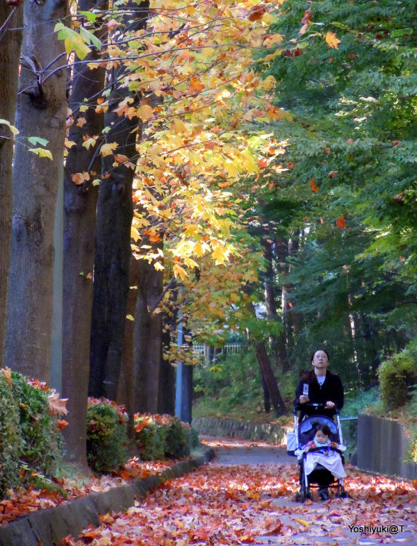 Mother and child on a walk in autumn,Kanagawa