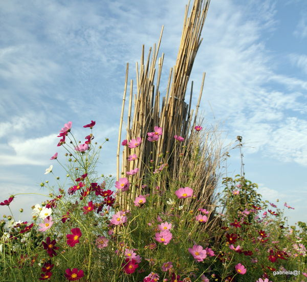 A floral arrangement made by the farmers,Kanagawa