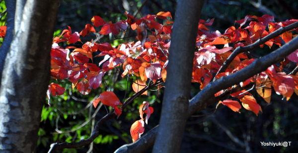 Trees in autumn,Kanagawa