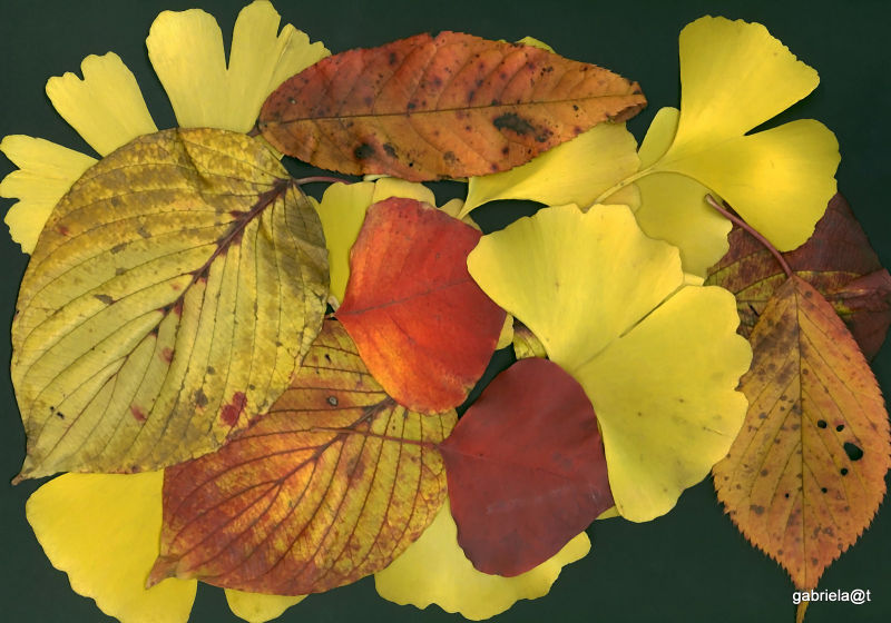 Patchwork of leaves