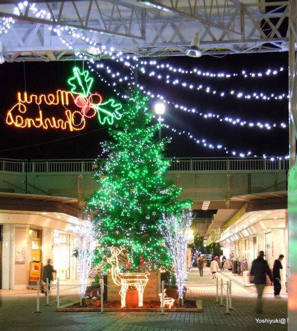 Christmas Tree illuminations in the neighbourhood
