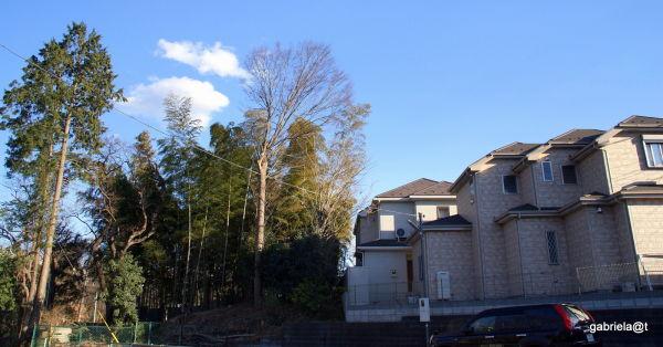 A quiet corner in suburban Kanagawa