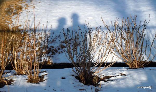 February afternoon, long shadows, Kanagawa