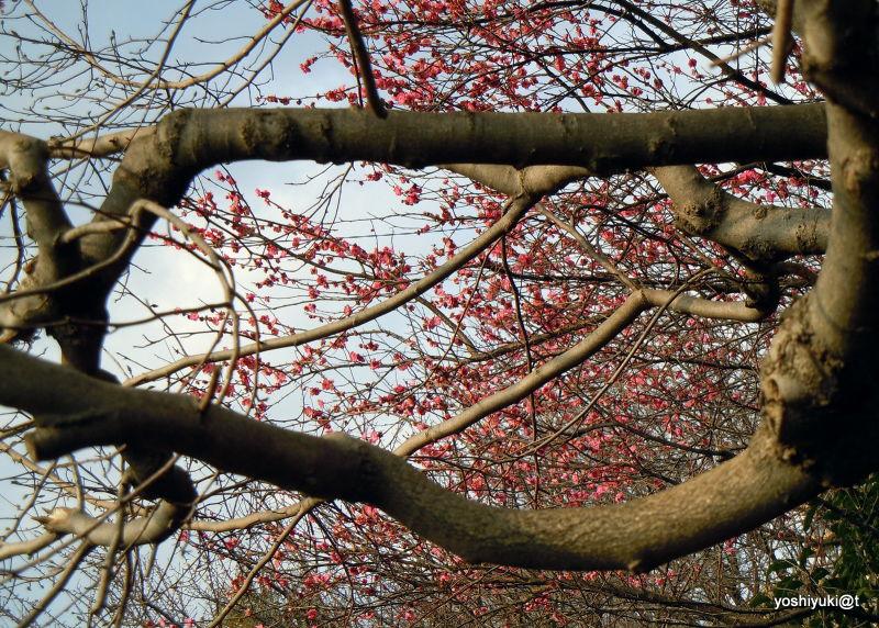 Trees create their own design, Kanagawa