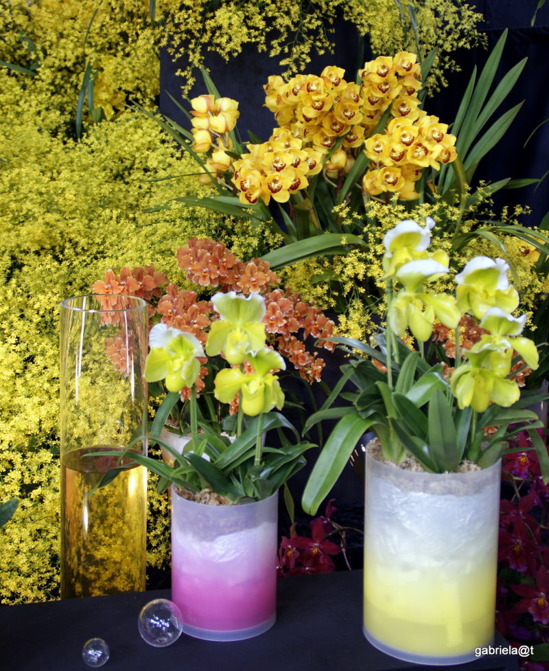 Desined scenery with orchids, Tokyo Dome,2011