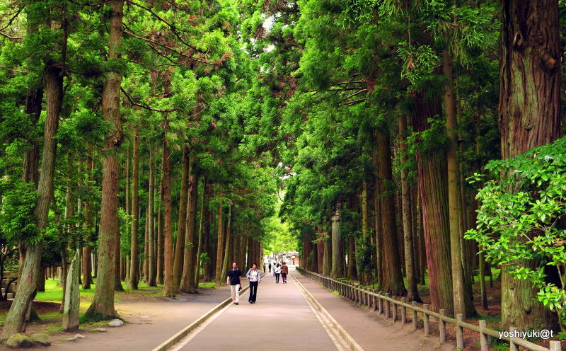 Famous places in Japan, Matsushima