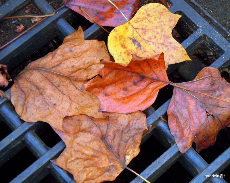 Fallen leaves this autumn