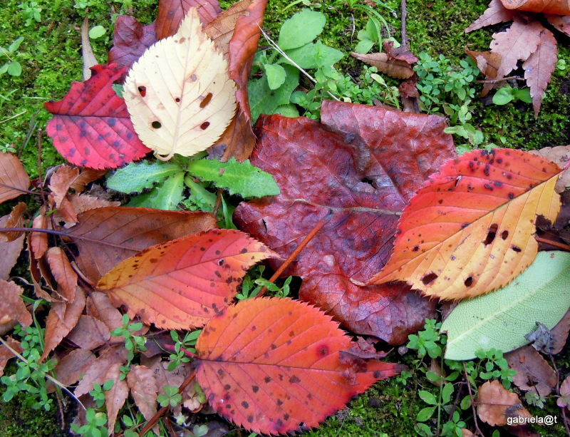 This autumn's colourful leaves