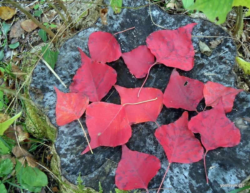 Leaf pattern on a stump in autumn