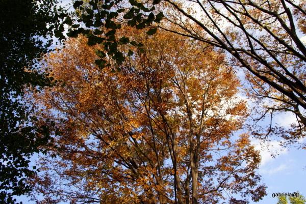 The elegant beauty of a Zelkova tree,Kanagawa