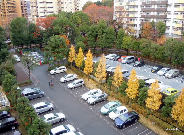 View from my balcony with gingko trees