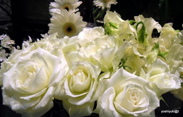 White flowers for Christmas