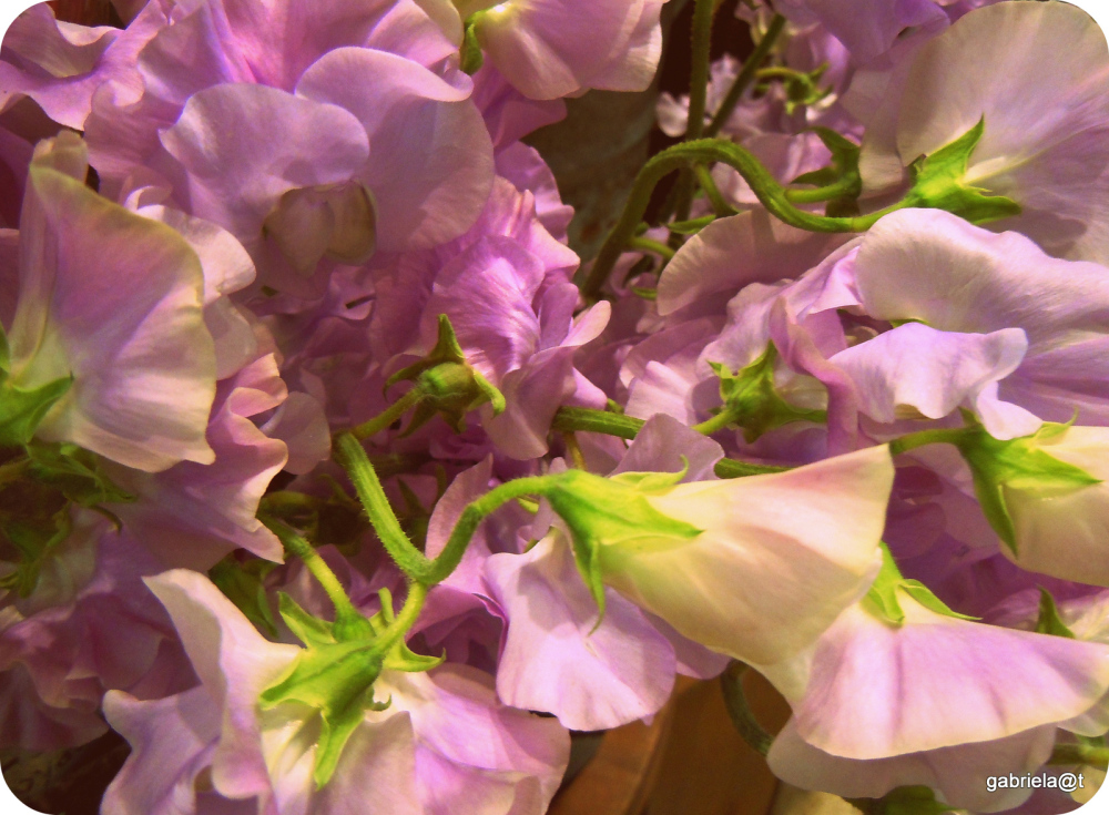 Sweet pea in a bouquet at the Flower Center
