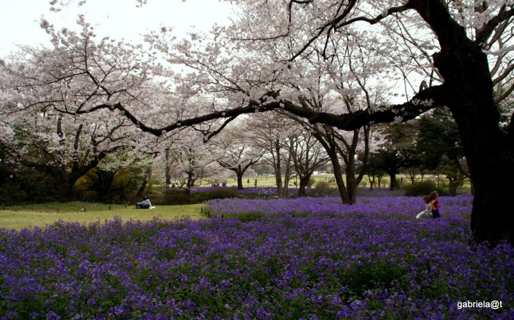 The Secret Stream Garden,Showa Park,Tokyo