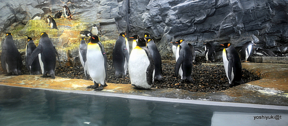 A look inside the House of Penguins, Asahiyama Zoo