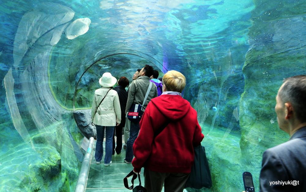 Walking Through Penguin Acquarium