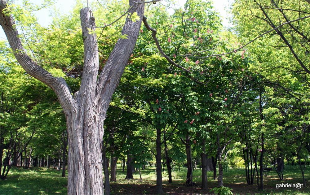 Trees in Nakajima Park, Sapporo, Hokkaido