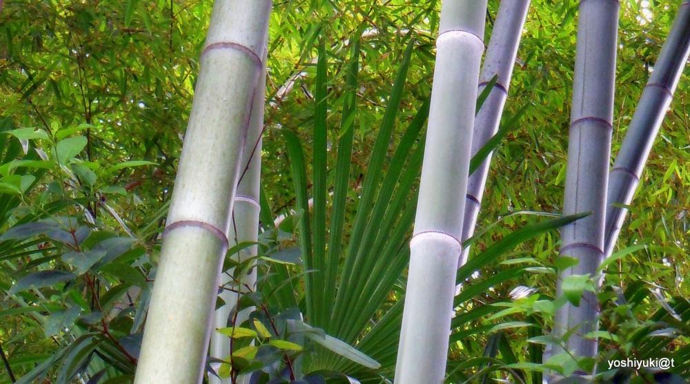 Bamboo grove, an interpretation