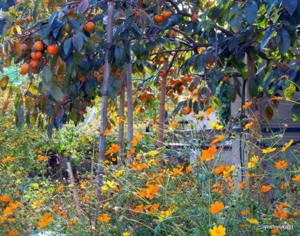 The Bounty of autumn...