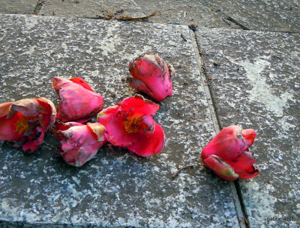 Still life with dead camellias