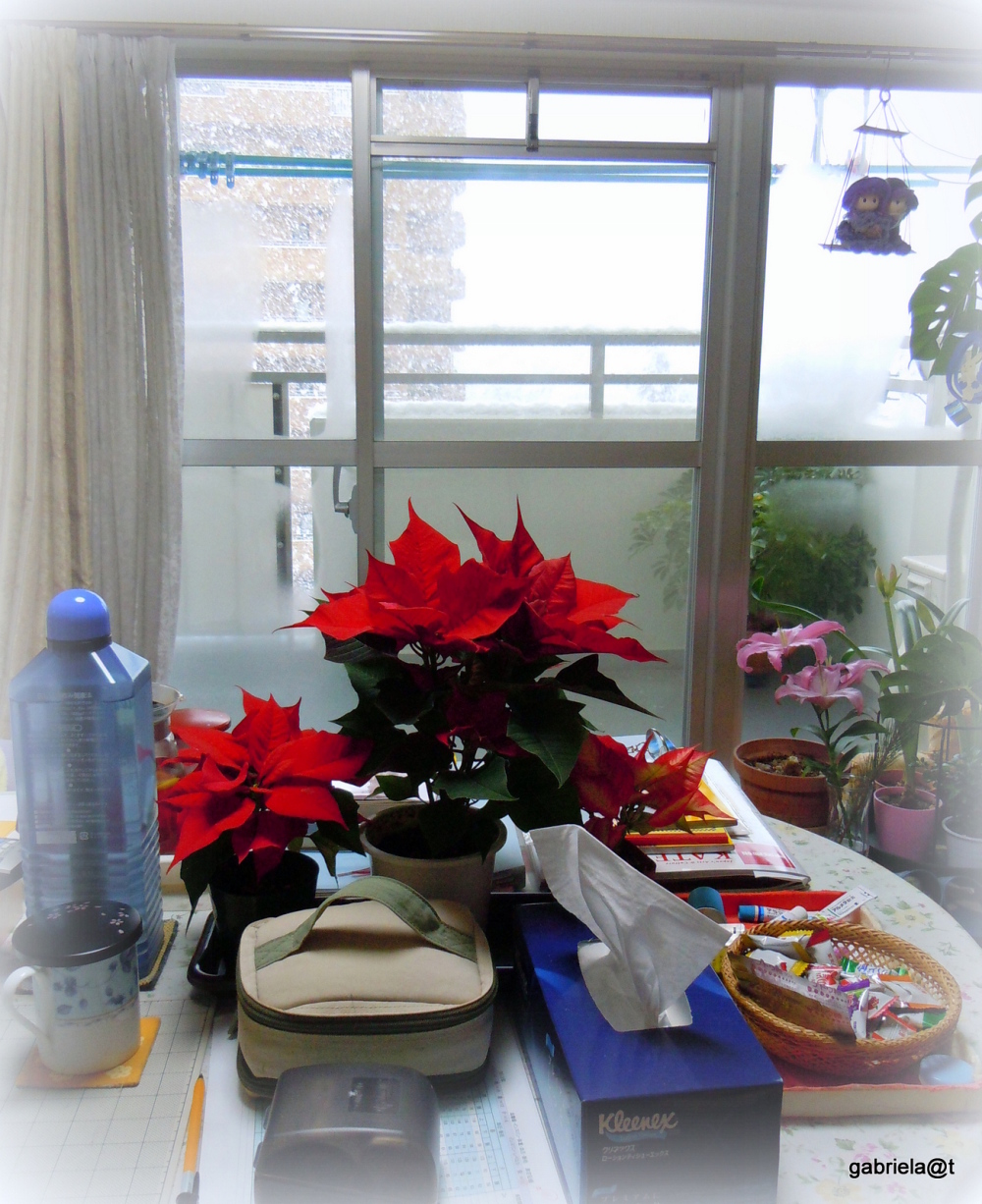 The poinsettia pots on my table in the livingroom