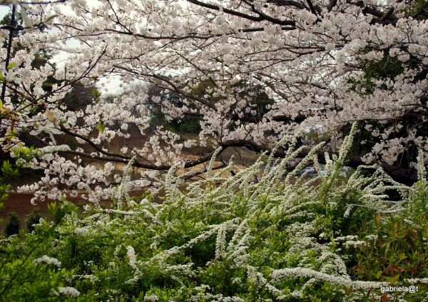 Delirium of spring, flowers everywhere