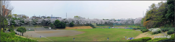 Our neighbourhood at the time of cherry blossoms