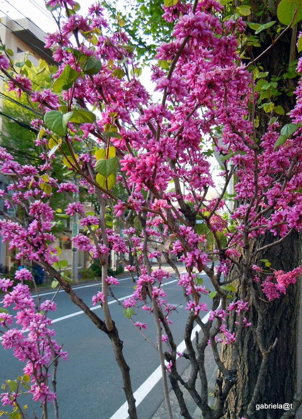 Street in spring