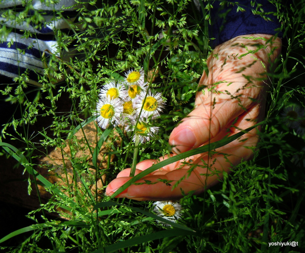 My hand through the grasses of May