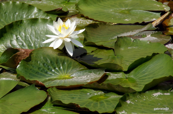 Flowers and leaves in the pond