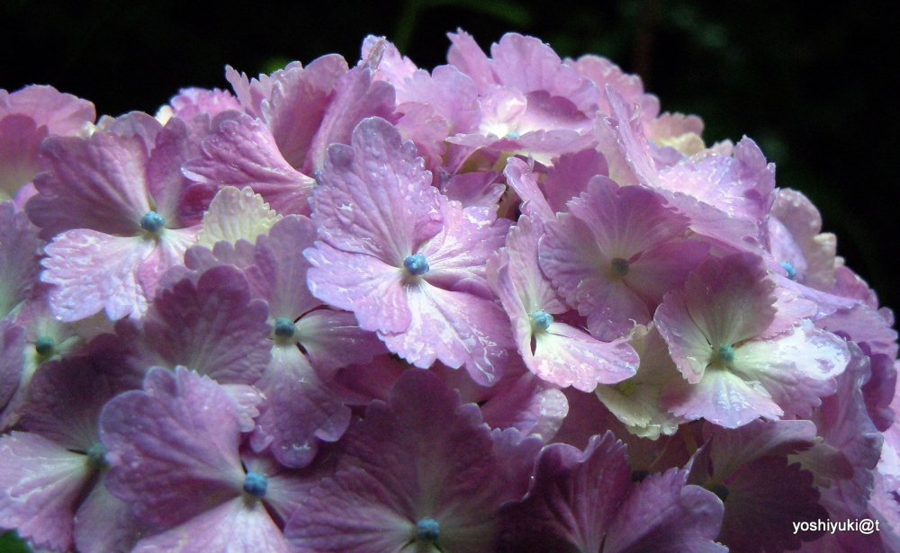 Flowers in the rains of June