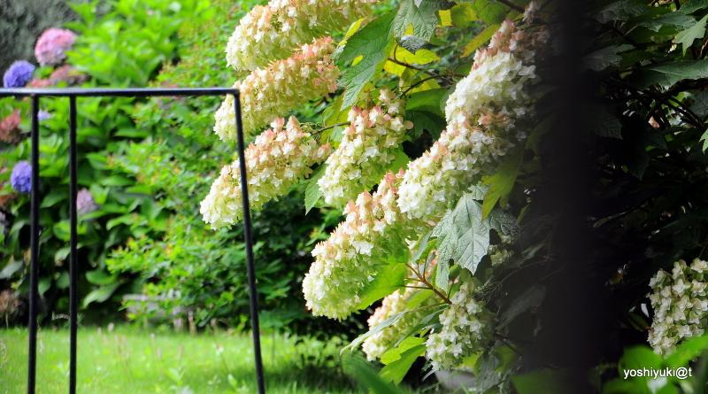 A July peek into a garden