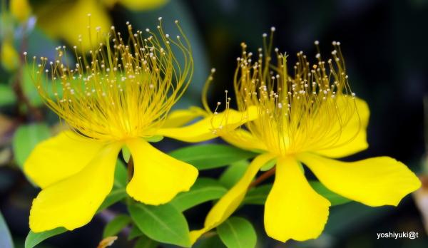 Flowers rich in stamina