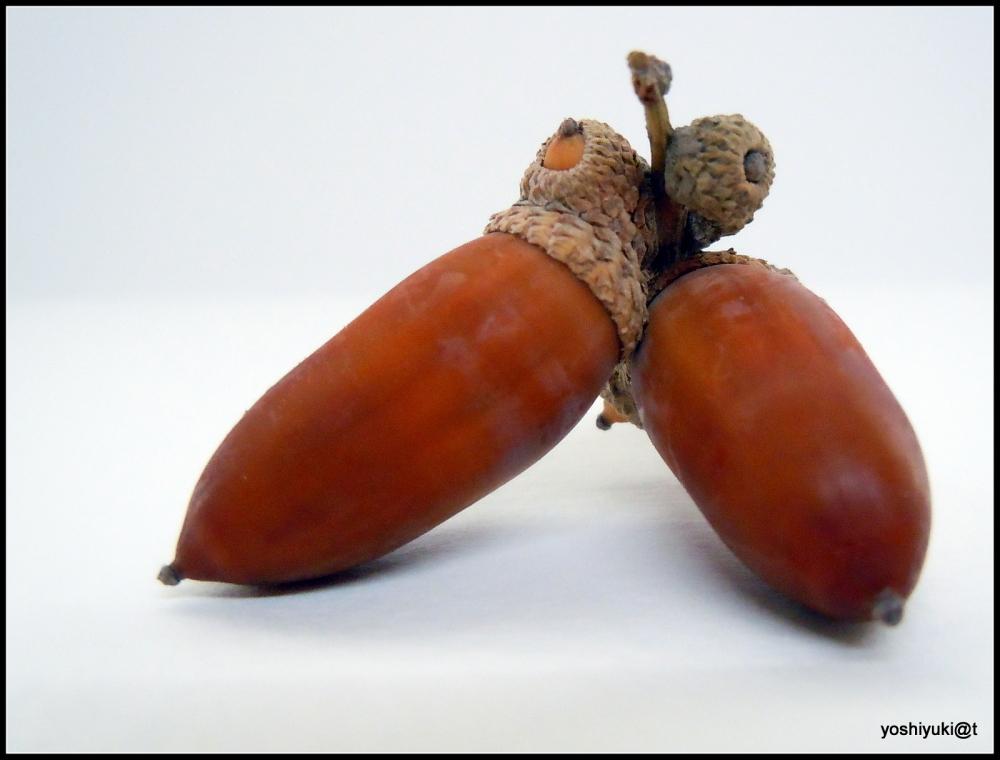 Acorn - a pair