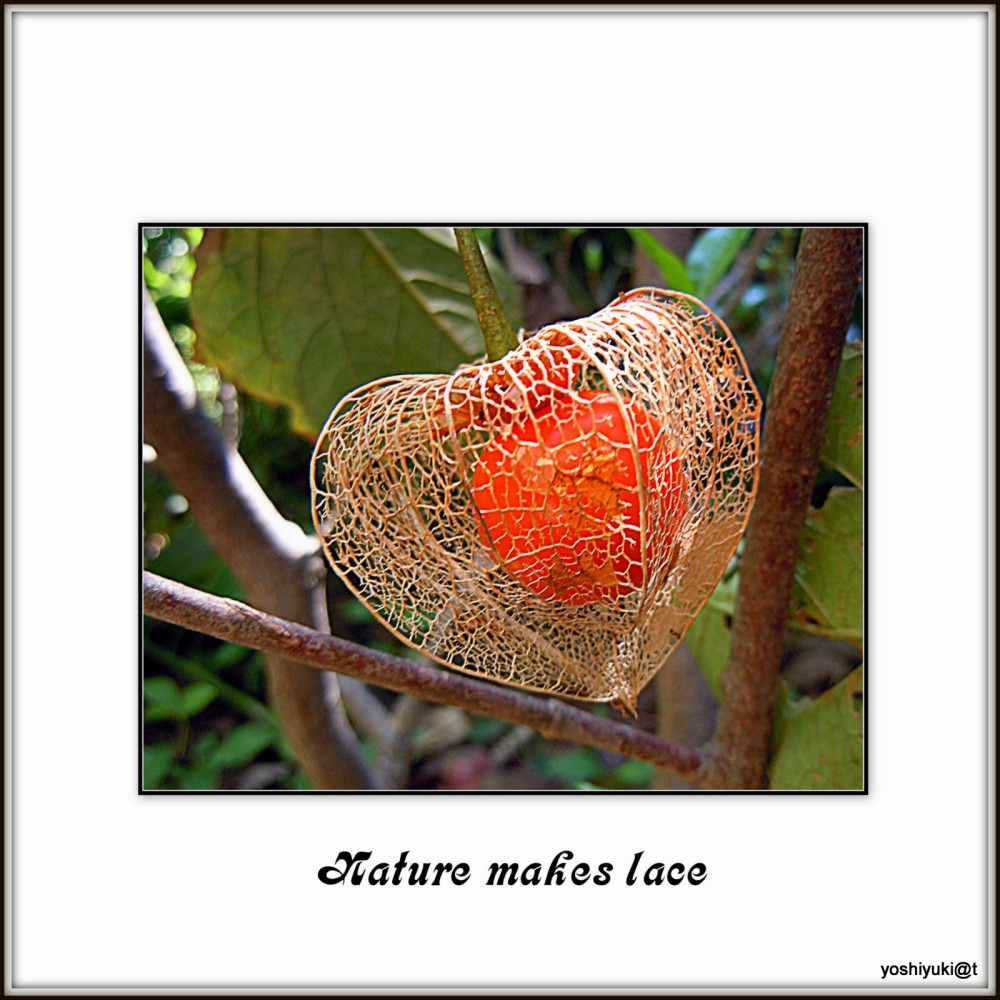 Nature makes lace
