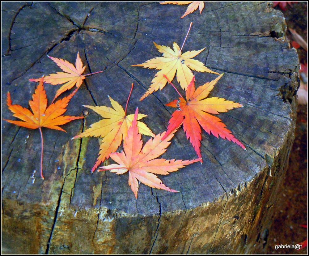 When maple leaves were falling...