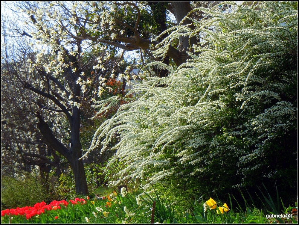 The place where I live, in early spring (7)