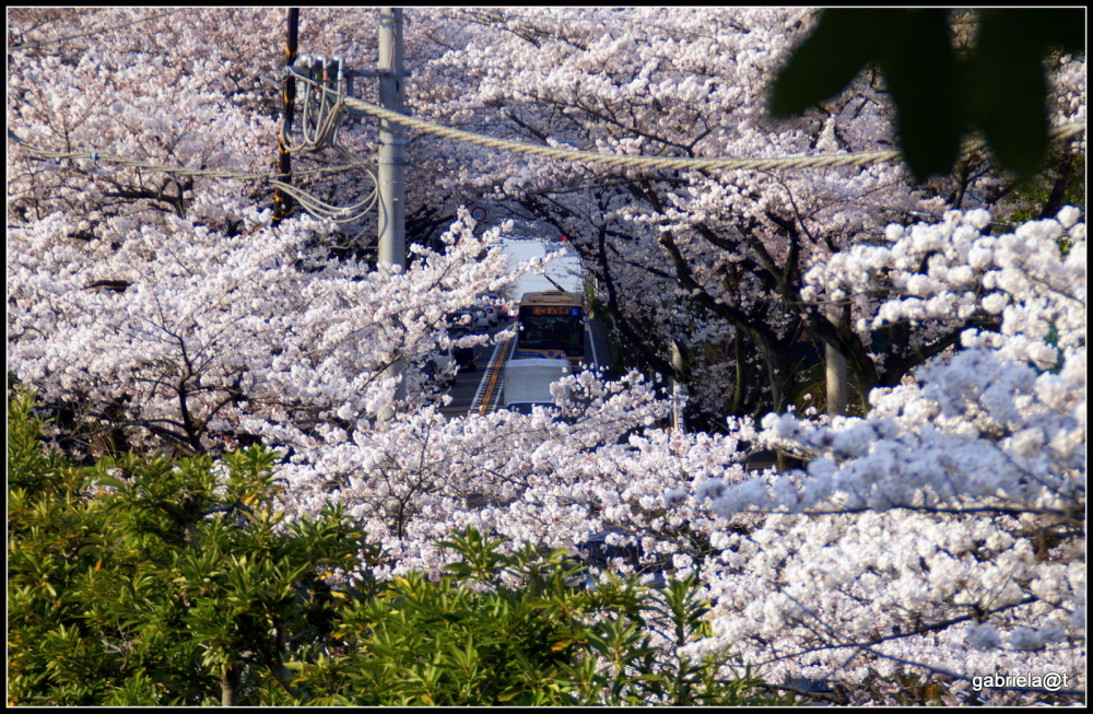 THE MOMENT ...with cherry blossoms