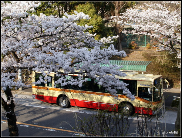 THE MOMENT with cherry blossoms -The Bus