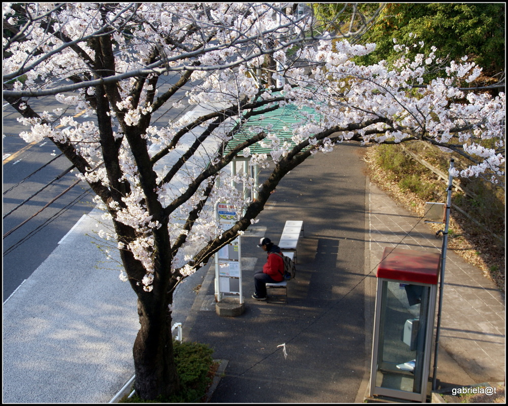 THE MOMENT with cherry blossoms (5)