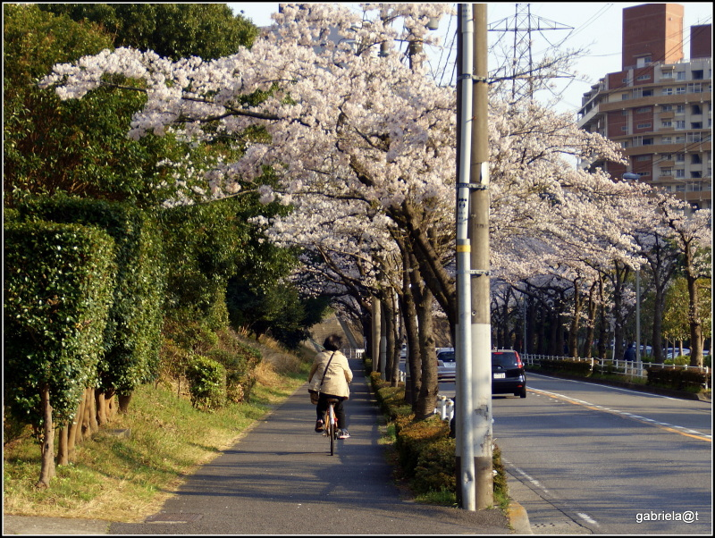 THE MOMENT with cherry blossoms (6)