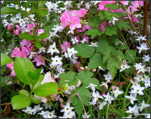 When flowers mix well in a garden corner