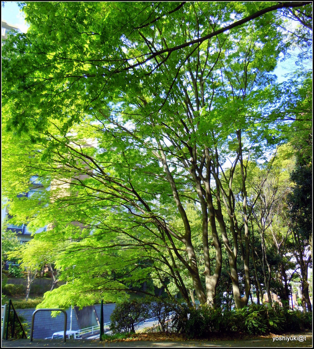 The amazing beauty of trees (3)