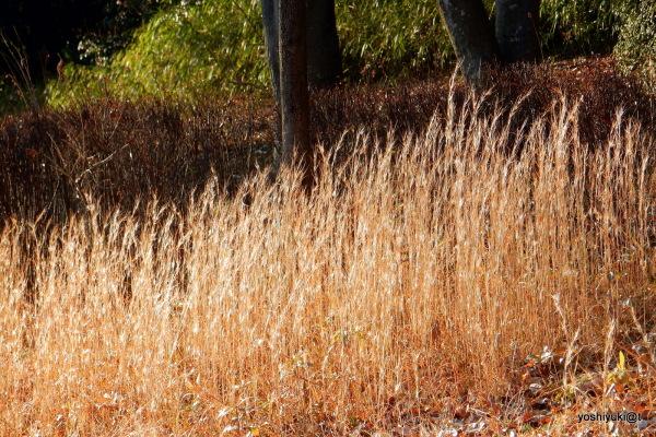 Light in the winter grasses