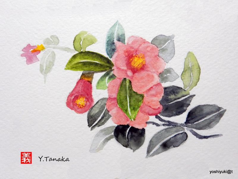 Watercolour of Camellia Japonica
