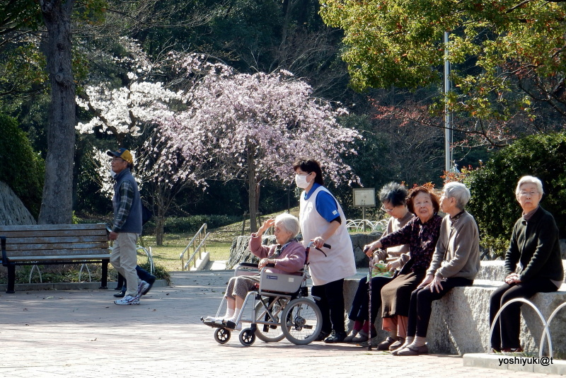 Elderly people enjoying a spring afternoon out