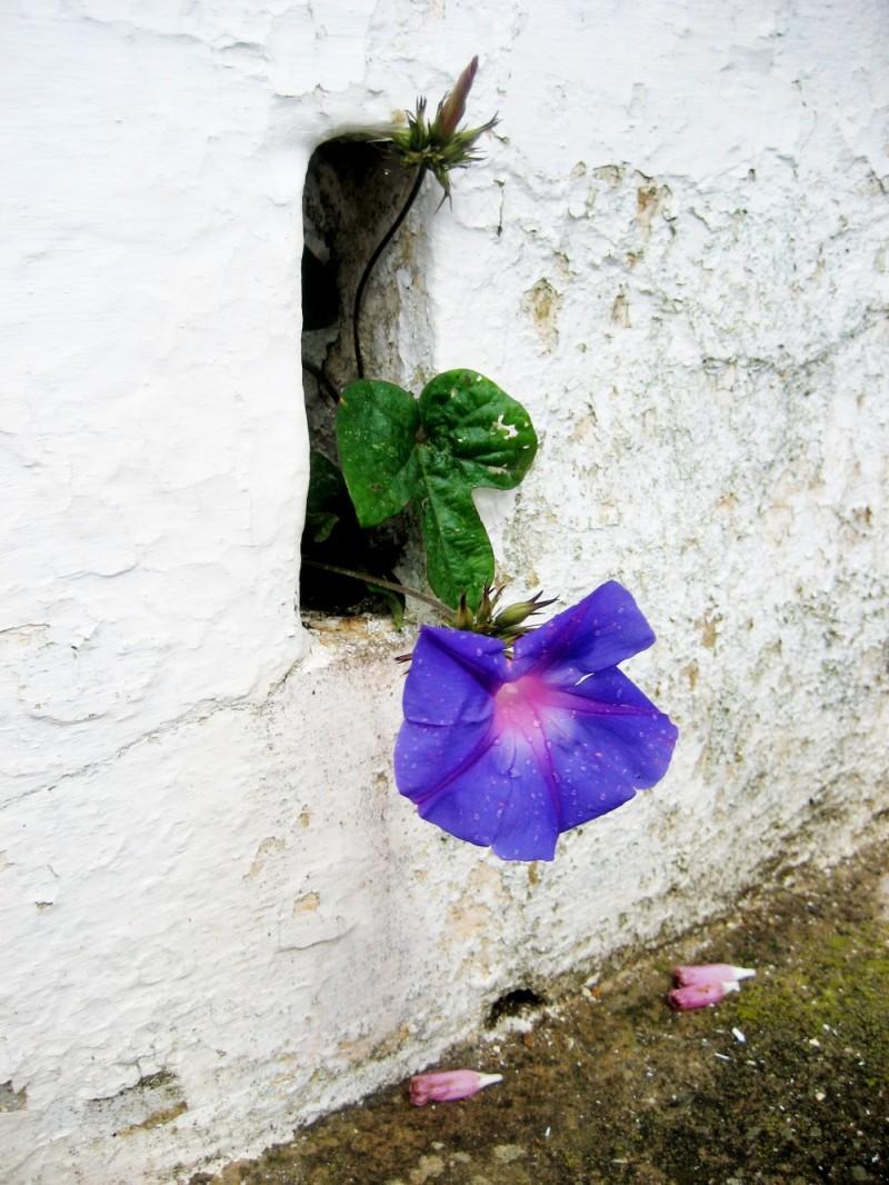 Blume an der Wand
