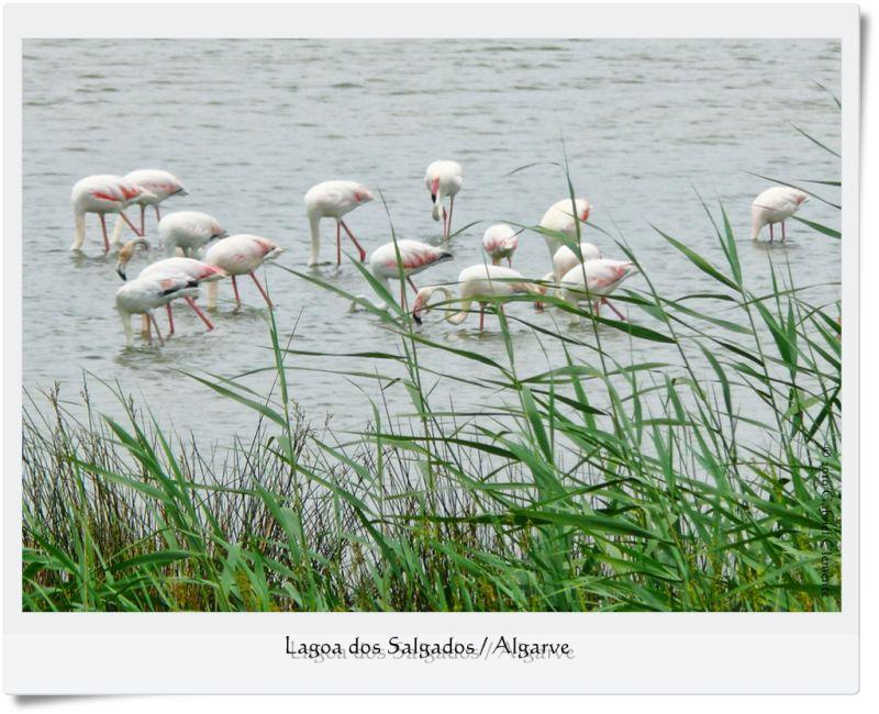 Lagoa dos Salgados / Algarve