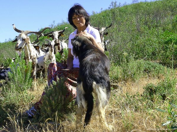 the shepherdess and the animals